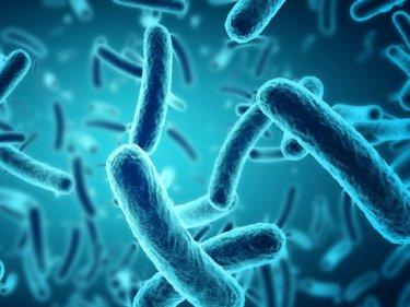 【iHerb】プロバイオティクスの効果・副作用・おすすめサプリ【乳酸菌】