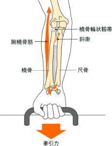 上肢に牽引力が加わったときの力の分散