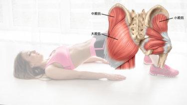 中殿筋の解剖学と関連症状