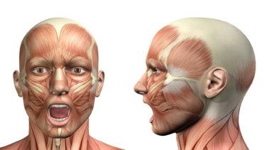 咀嚼筋の解剖学と関連症状