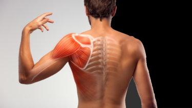 回旋筋腱板(ローテーターカフ)の解剖学と関連症状