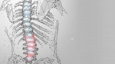 多裂筋の解剖学と関連症状