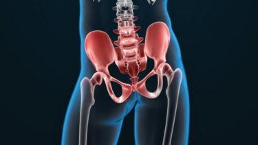 恥骨結合の関節運動学と関連症状
