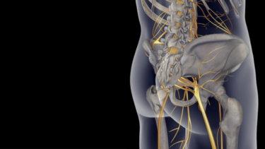 梨状筋の解剖学と関連症状