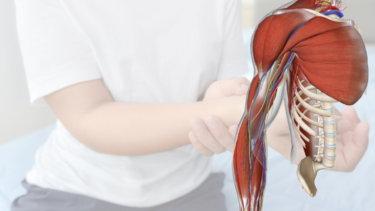 筋皮神経の走行・機能・絞扼箇所・関連症状