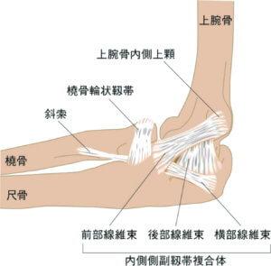 肘関節の内側側副靭帯複合体