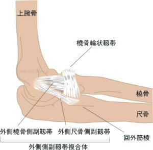 肘関節の外側側副靭帯
