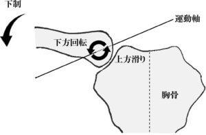 胸鎖関節の関節内運動
