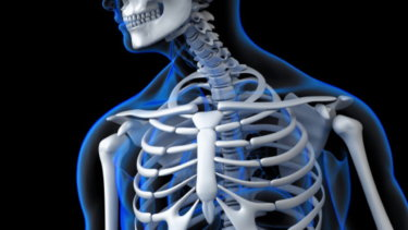 胸郭の関節運動学と関連症状