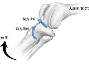 脛骨伸展の関節内運動