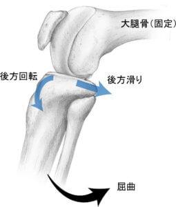脛骨屈曲の関節内運動