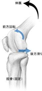膝伸展の関節内運動