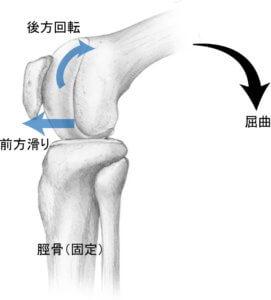 膝関節の関節内運動