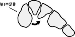 長腓骨筋による第1中足骨底と内側楔状骨への外反作用