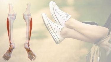 長腓骨筋の解剖学と関連症状